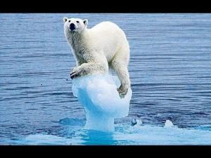 Climate change - ijsbeer